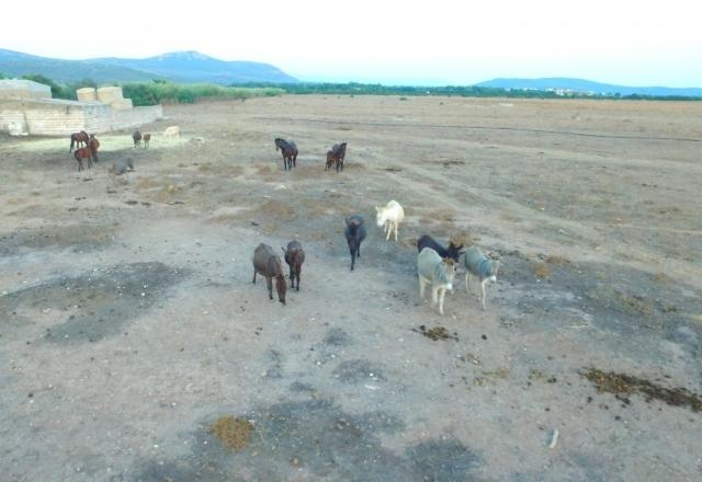 Donkeys and horses